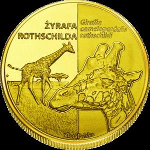 Zoo Poznań żyrafa 424